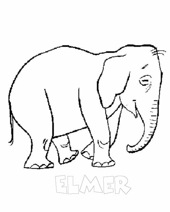 Safari Pictures Coloring Page